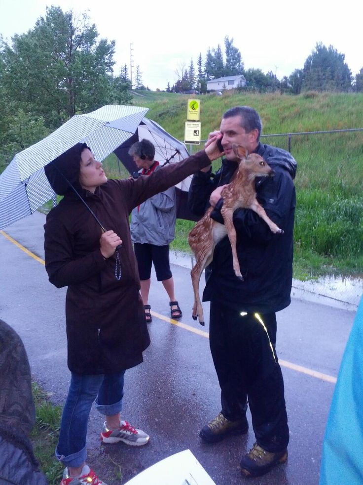 @DallasFlexhaug 2m Awesome picture out of all this crazy weather business (ctsy Dale Melenberg) 2 strangers rescue a fawn from Bow River pic.twitter.com/PnKuySsF1E