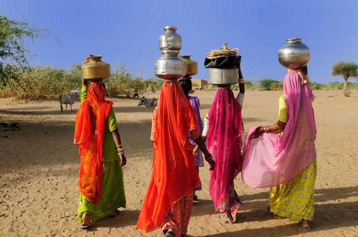 I colori e l'eleganza delle donne indiane in cammino verso l'acqua.  Thar desert, Rajasthan.