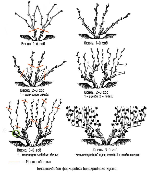 правильная обрезка и формирование виноградной лозы весной - Поиск в Google