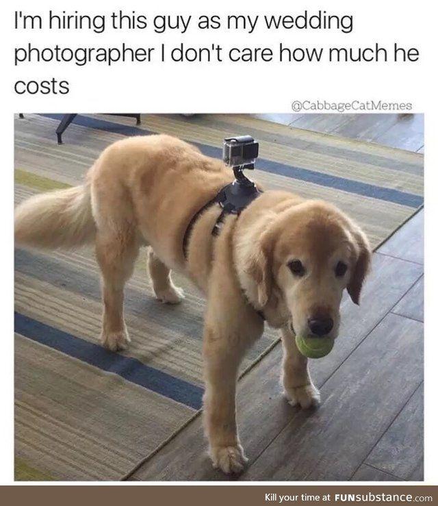 Doggo the wedding photographer