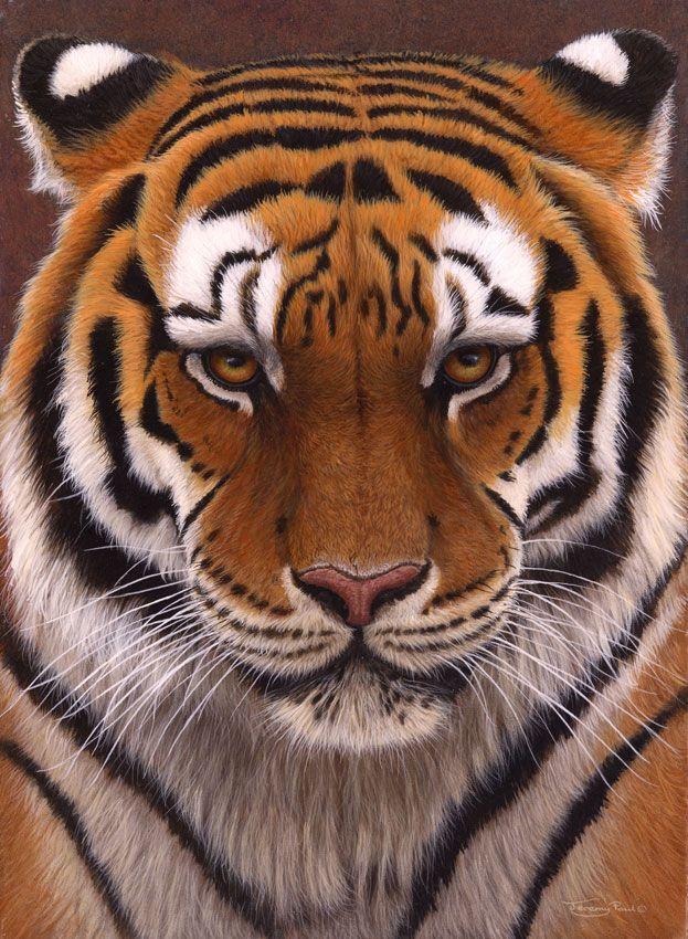 Intense Siberian Tiger, UK Wildlife Artist Jeremy Paul