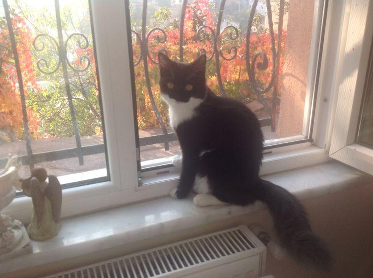 Anima kuzguncuk sonbaharını izliyor