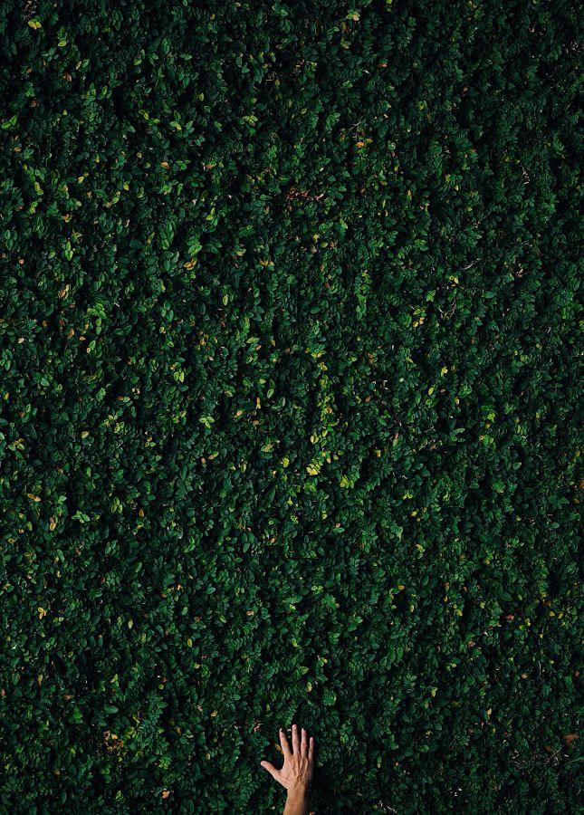Green Hand by Ante Badzim - Photo 148421403 - 500px