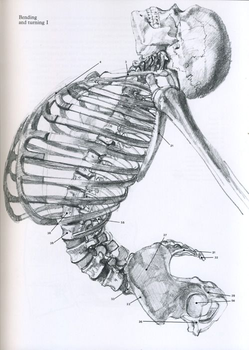 skeleton bending and turning    this is amazing. try drawing a rib cage.