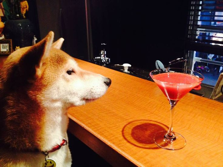 Share a premium cocktail with man's best friend. Sheep herder: Hana-chan is responsible for rounding up many of Bar Black Sheep's regulars. | ANGELA ERIKA KUBO