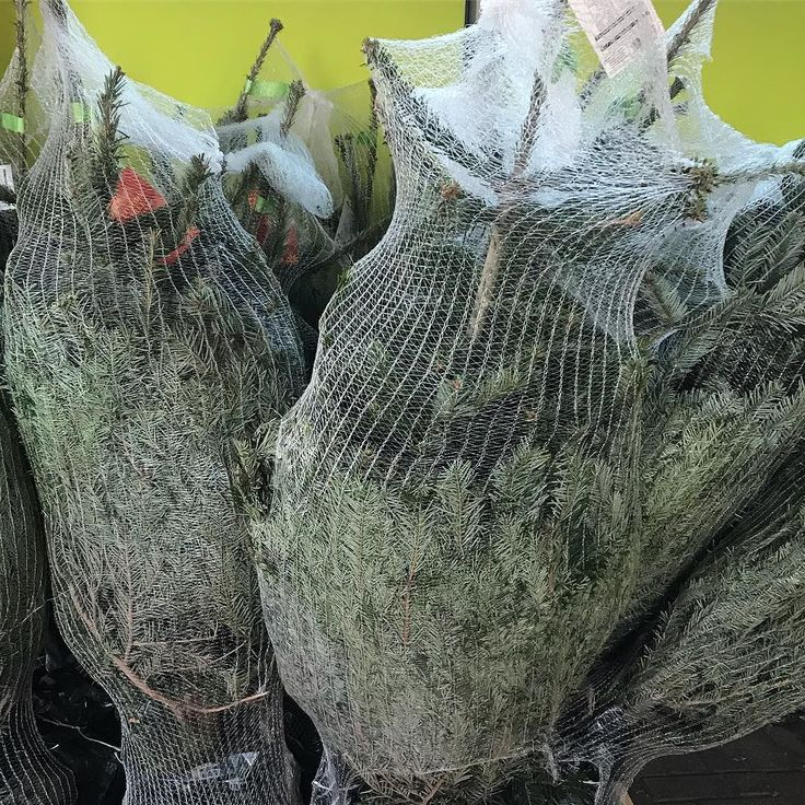 I know I like a good #christmasscountdown but look what I saw at Asda yesterday - fresh Christmas trees on sale already - surely this is a bit early?? What do you think?
