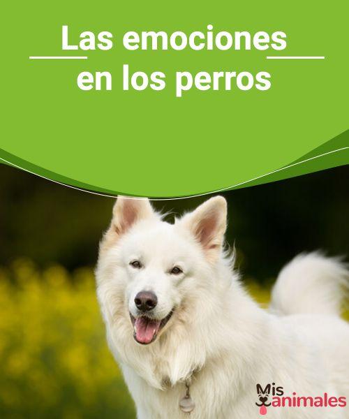 Las emociones en los perros   Este siempre ha sido un dilema de los científicos y amantes de las mascotas. ¿Existen las emociones en los perros? Nosotros respondemos con un SÍ. #perros #emociones #curiosidades #sí