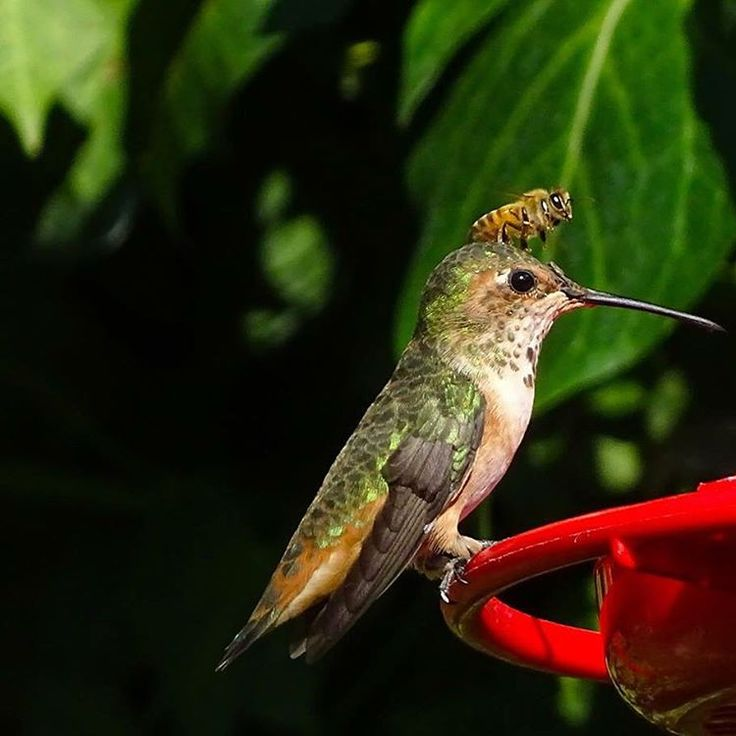 """""""The Humming Bird and the Bee have similar taste"""