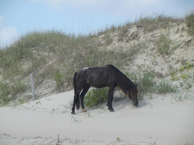 Wild Horses Corolla Tour