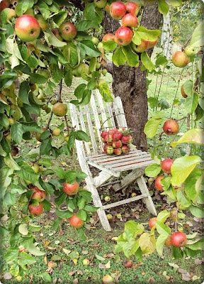 One day my apple tree will be this laden with fruit.
