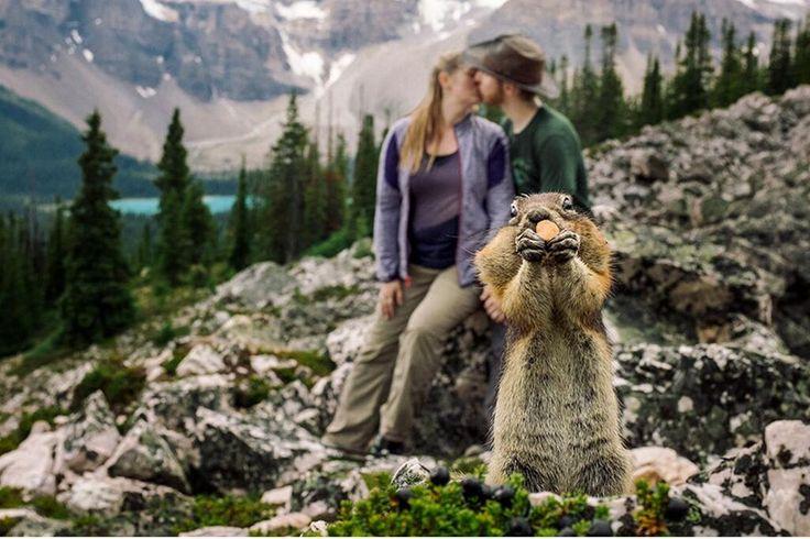 Süßes Eichhörnchen photobombt Verlobungs-Shooting