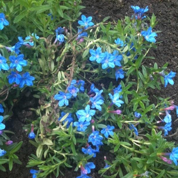 Zo mooi blauw!