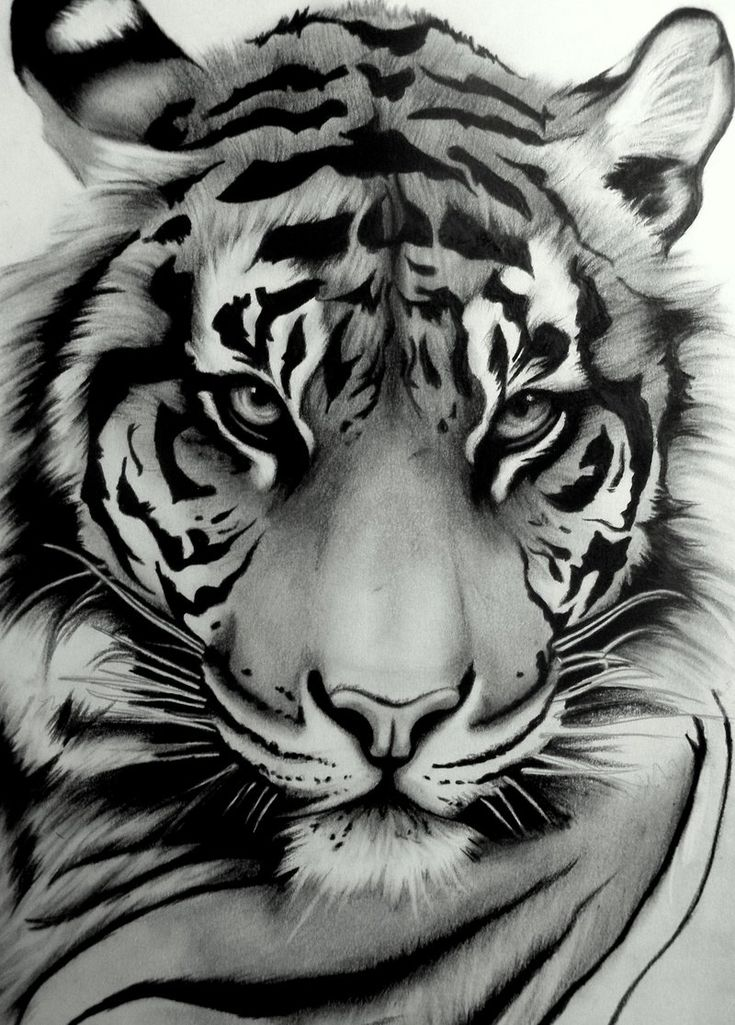 Love this. Live tigers. Don't know where I would put this, but I want it in color, definitely