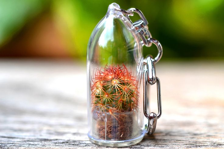 ♥ About Copper King Cactus Terrarium Keychain ♥  Copper King cactus is hardy cactus species native to Mexico which features reddish orange spines that is harmless to the touch. They grow in clusters and can reach up to 6 inches in height with 12 inches of horizontal spread. In the spring they may produce white to yellow flowers. Other common nickname is Ladyfinger Cactus.  ♥ Mini Plant Info ♥ Genus name- Mammillaria Elongata Watering frequency- 30 Days Sun requirements- Light Shade  How to…