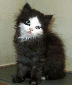Qué hermoso gatito ❤️