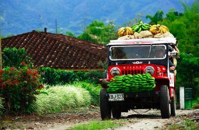 Paisaje cafetero de Colombia