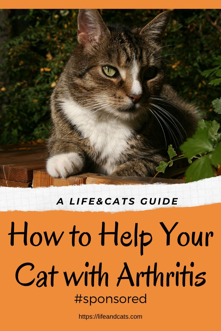 Arthritis In Cats Life Cats Pet Care Cats Cat Health Problems Cats