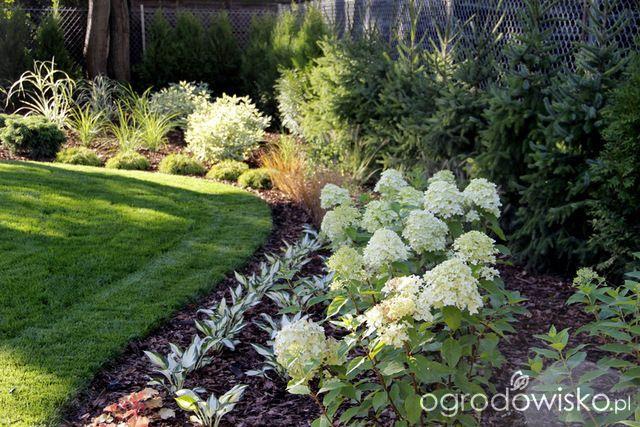 Zimozielony ogród przy białym domu - strona 135 - Forum ogrodnicze - Ogrodowisko