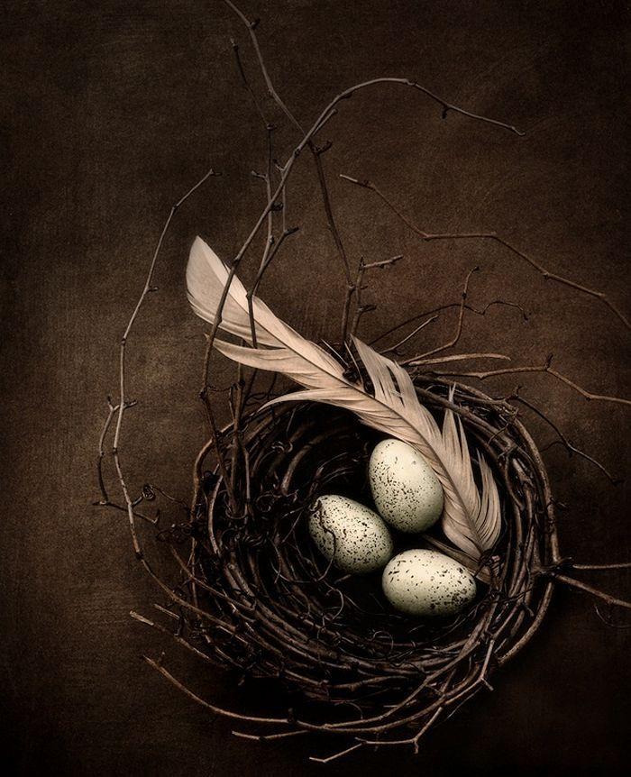 Eggs in Nest - Still Life #stilllife #photography