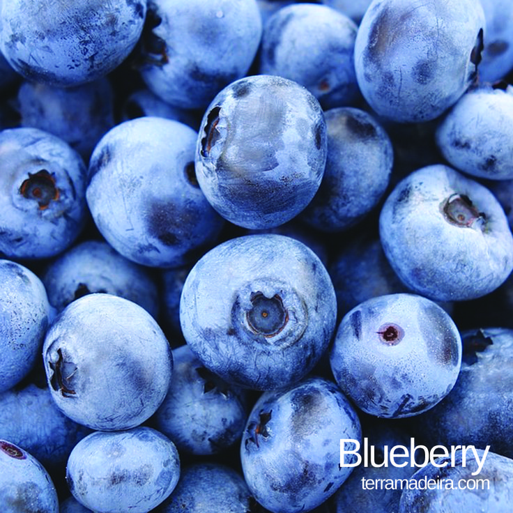 The blueberry is a berry with a waxy blue color and a five-pointed star the top. This fruit is a powerful antioxidant. #terramadeira #madeira #blueberry #fruit