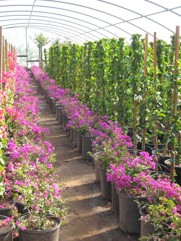 A Wholesale Grower Proudly Serving Garden Centers, Landscapers And  Contractors ...