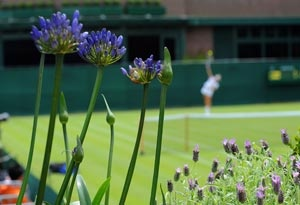 Five-time Wimbledon champion Venus Williams suffered her worst All  England Club defeat in 15 years , but top seeds Novak Djokovic  and Maria Sharapova and Roger Federer powered into the second round.