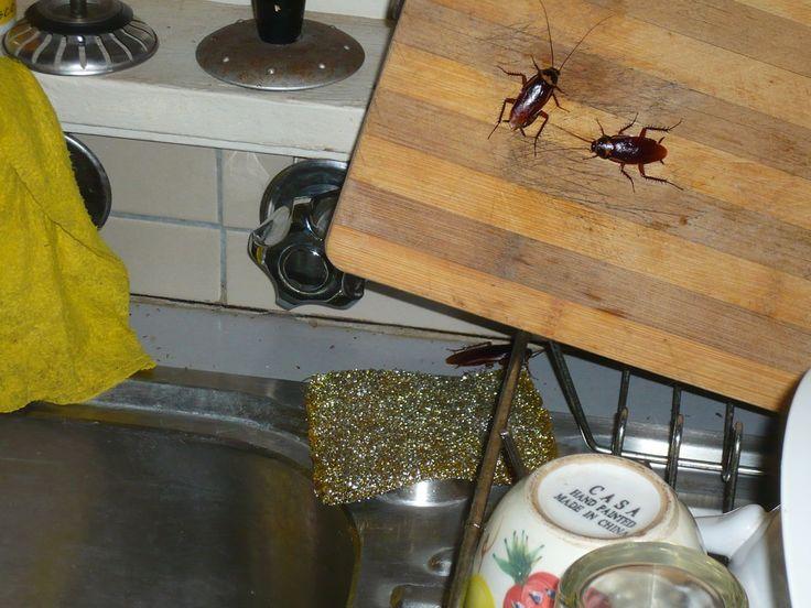 M s de 25 ideas incre bles sobre exterminador de insectos for Como eliminar cucarachas del desague