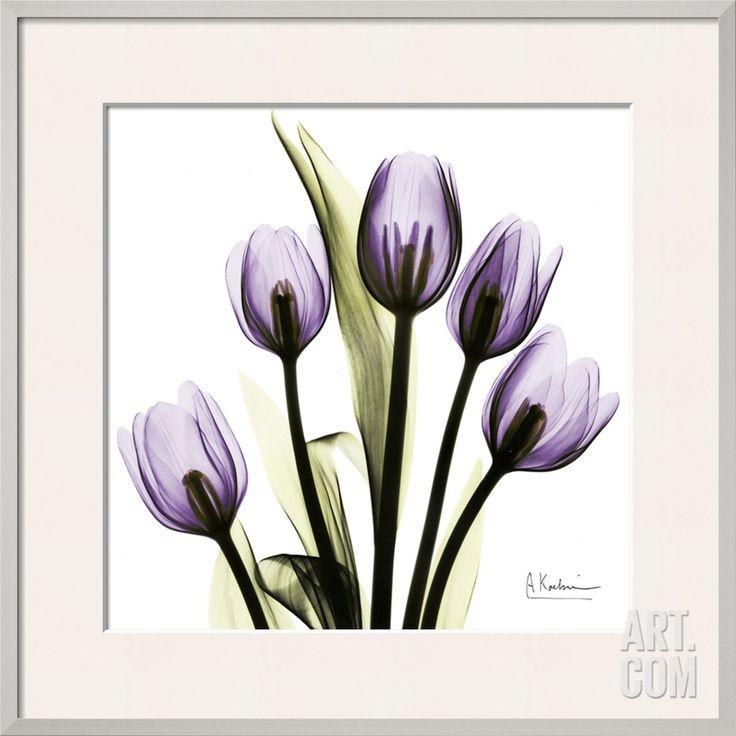 Tulip in Purple, by Albert Koetsier