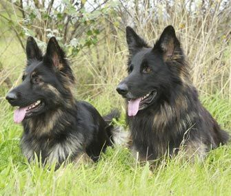 We've compiled a list of favorite names for the always-popular German Shepherd. Is yours here?