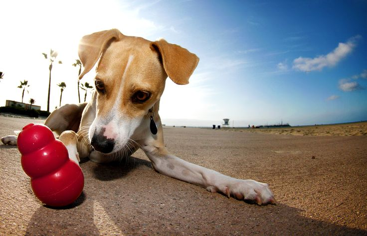 20 Fun And Easy Games To Keep Your Dog Fit - Long Live Dog