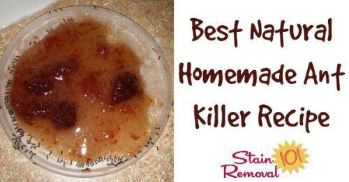 melhor receita formicida caseiros naturais