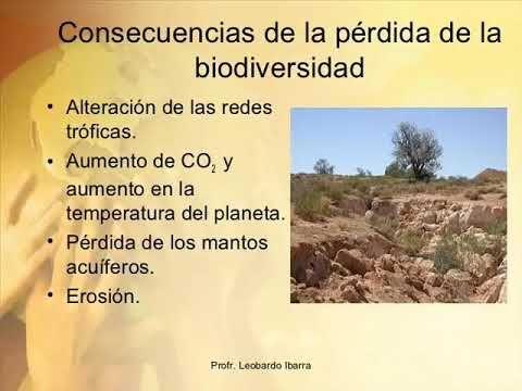 Consecuencias de la perdida de la biodiversidad