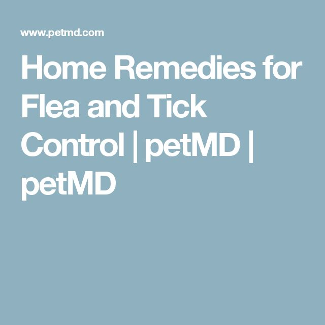 Home Remedies for Flea and Tick Control | petMD | petMD