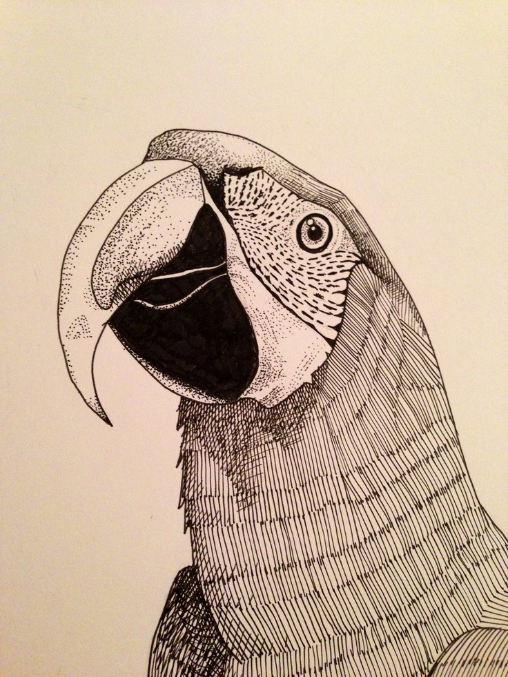Parrot. Pen Drawing. Mongo Gushi does lovely drawings ...