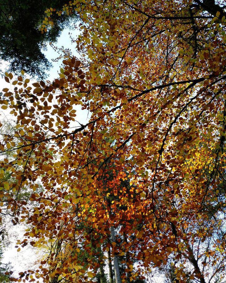 #Naturmomente #Schwarzbubenland #Solothurn #Nunningen #Schweiz  #photooftheday #magicplaces #kraftorte #switzerland #switzerlandpictures #magicswitzerland  #nature #naturelovers #green #creek #forest #fall #autumn