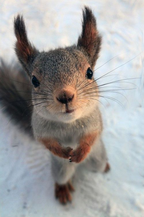 I just go crazy with squirls...they are so cute!!