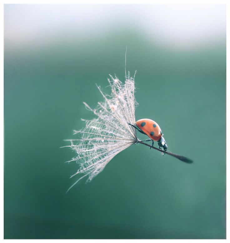 Writing prompt: weee! tell the story from the ladybirds point of view