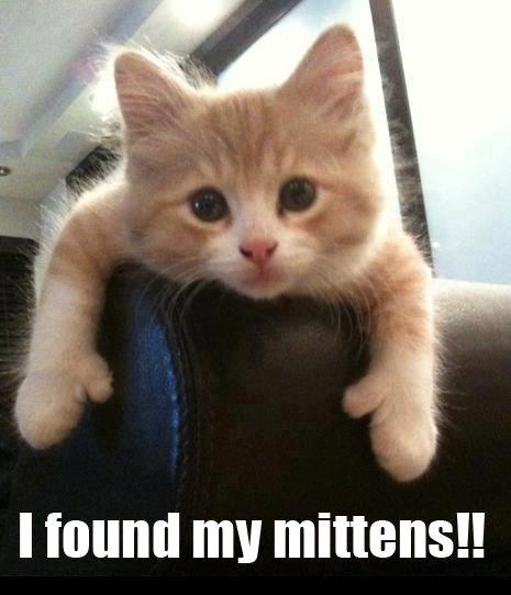 I Found My Mittens!! Kitten Meme