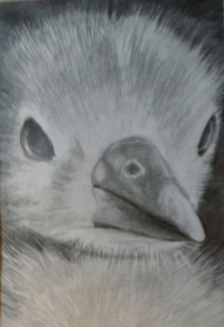 186_Kücken Bleistiftzeichnung