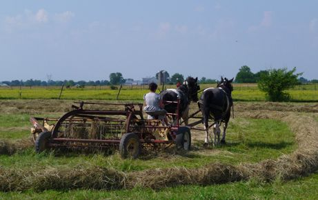 amish village...montgomery indiana