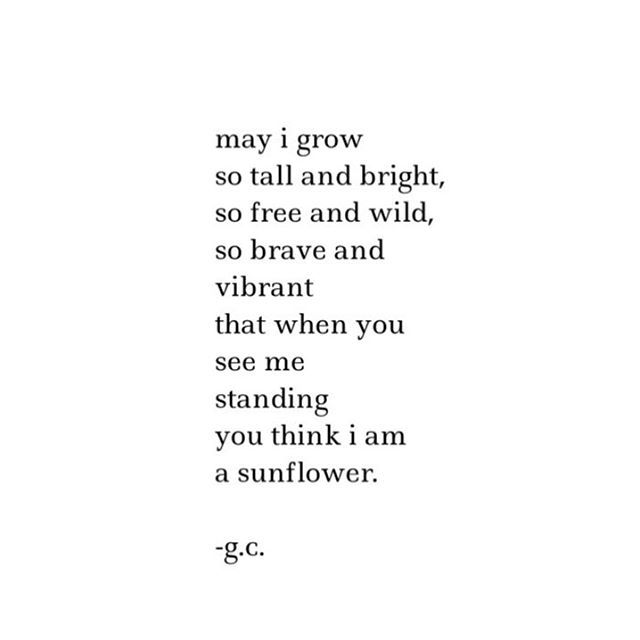 sunflower // no. 480 // written about ten minutes ago.