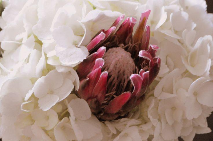 protea and hydrangeas!