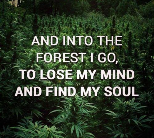 A marijuana forest would be awesome!