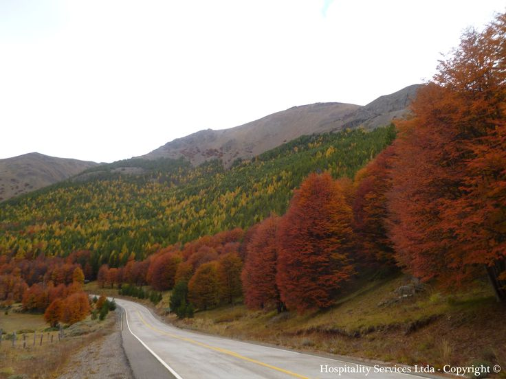 Photo: Hospitality Services Ltda . Copyright © This picture was taken in mid-autumn on the road to Isla Macías. Every year, the differences between each type of trees create this incredible range of colors along the Carretera Austral road.
