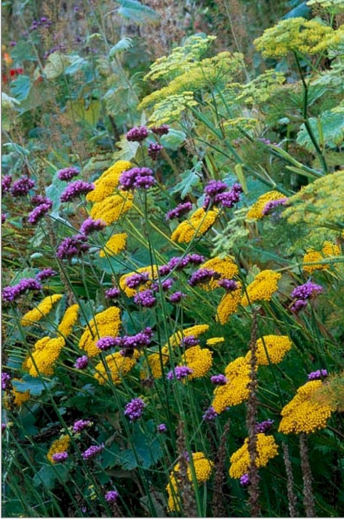 75 best planting combination ideas for beautiful garden for Perennial plant combination ideas