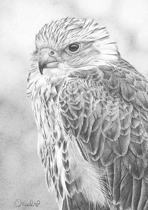 Pencil_03 on karapaia.livedoor.biz/archives/ #owl #bird #drawing