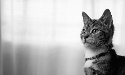 11 Fun Facts About Cats
