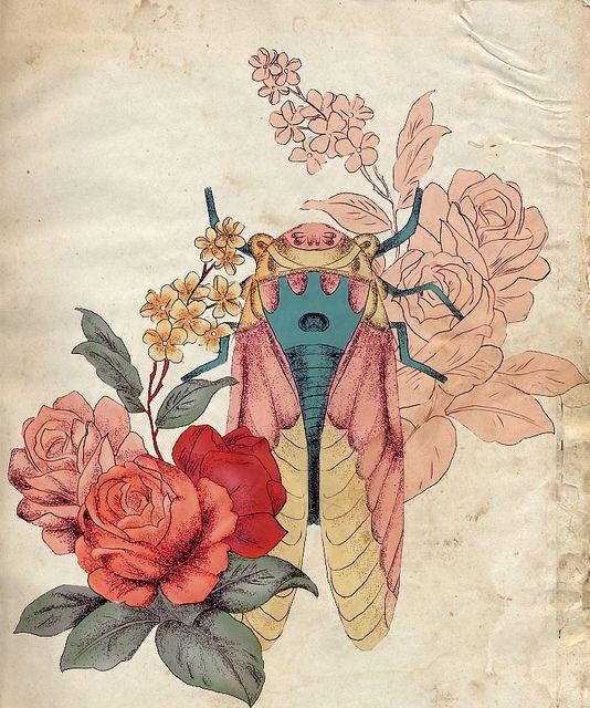 magicicadas by Elissa Rocabado