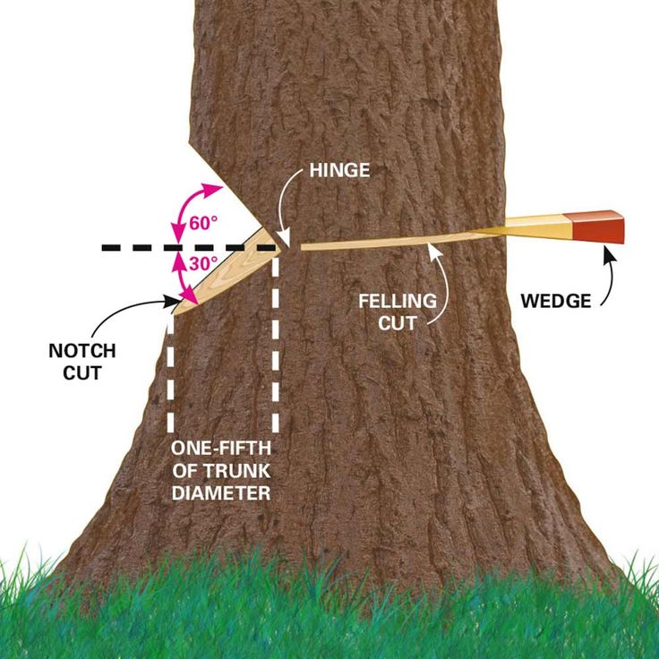 Cut Down a Tree Safely - Make it fall where you want it ~ via www.familyhandyman.com/landscaping/how-to-cut-down-a-tree?_cmp=DiyTipsHints&_ebid=DiyTipsHints7/28/2015&_mid=55704&ehid=4b53b4a97feeb8b16fa083d4de144d36609c729e#6