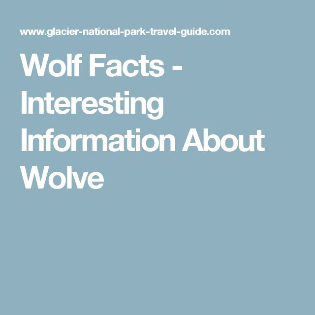 Wolf Facts - Interesting Information About Wolve